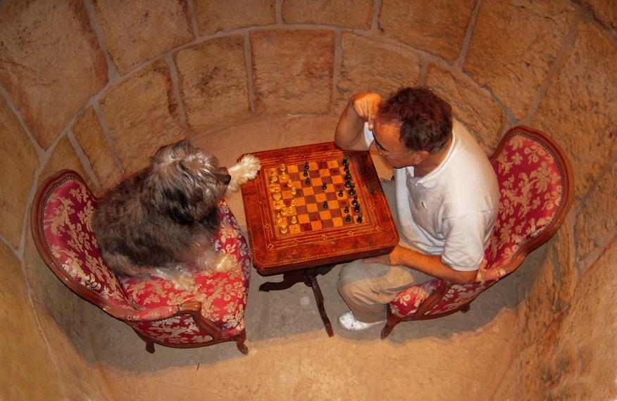 Gran encuentro de ajedrez