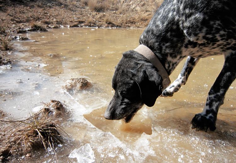 trufa perro sediento